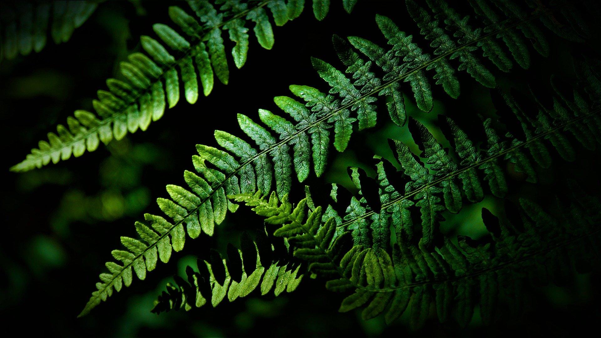 plus2sens - environnement - biodiversité